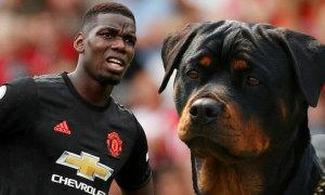 Pogba chi gần 20.000 USD mua chó bảo vệ