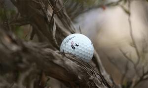 Những cây bách độc địa ở PGA Championship
